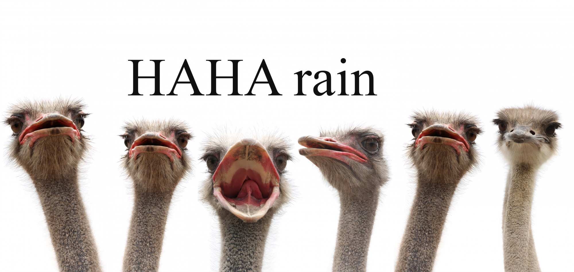 HAHA rain - Books for kids who don't like to read